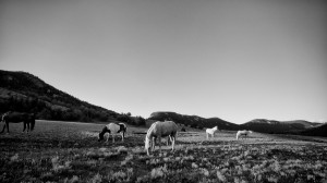 horses-on-ranch-land