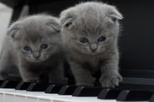 cat-1845787_1280